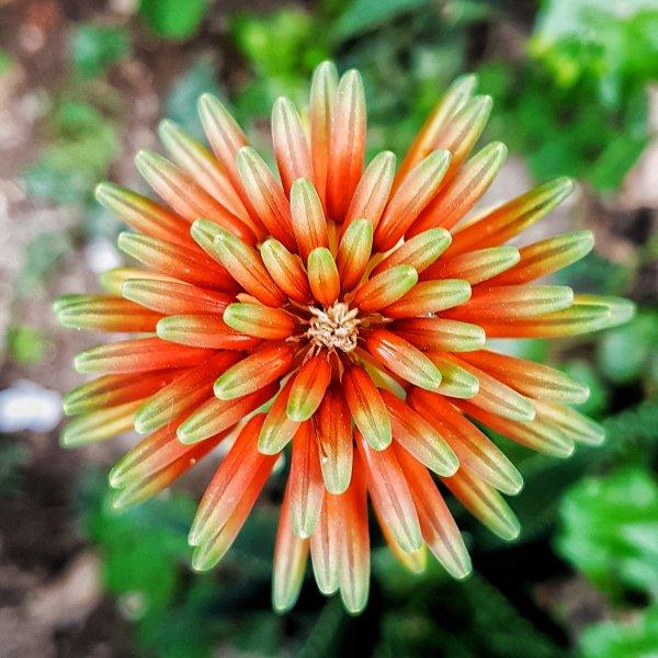 Doğanın rengi